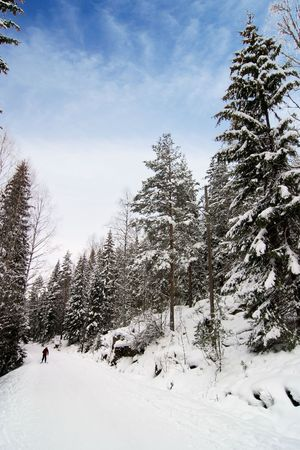 Cross country ski trails on a beautiful blue winters days. Stock Photo - 859252