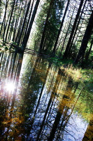 A reflection in the forest with a shallow pool of water. Stock Photo - 1534307