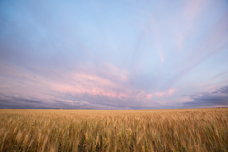 A pairie landscape ready for harvest photo