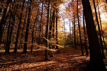 A  autumn forest with golden and red leaves photo