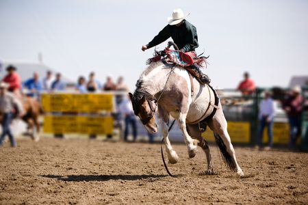 bronco: A saddle bronc rider at a local rodeo