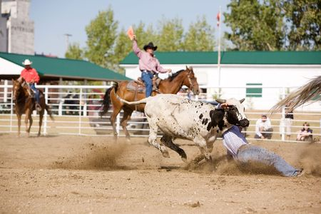 striving: Steer wrestling at a local small town rodeo