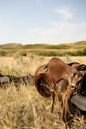 western saddle: A western saddle laying on the prairie grassland bathed in warm sunlight Stock Photo