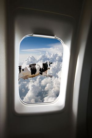 A flying cow viewd out a plane window Stock Photo - 2532624