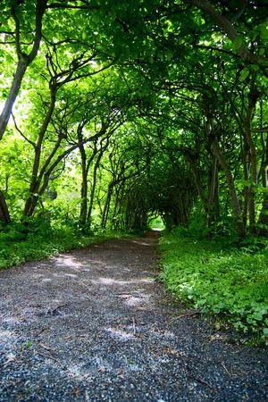 A mystical path through trees in a garden photo