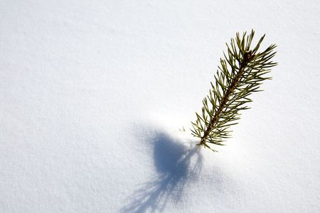 surviving: A small tree surviving in the snow