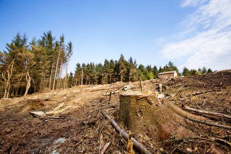 フォア グラウンドで木の切り株と明確なブロック