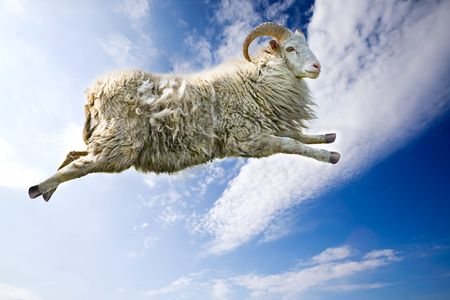 ram horn: A flying sheep through a beautiful blue sky Stock Photo