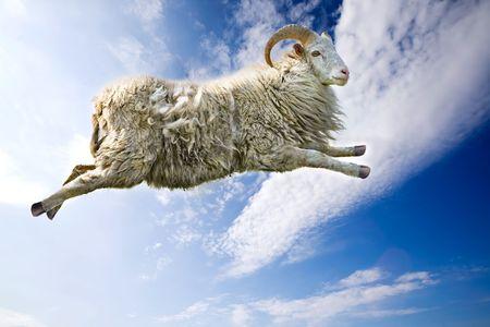 carnero: Una oveja de vuelo a trav�s de un hermoso cielo azul