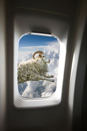 A flying sheep outside a plane window Stock Photo - 3292888