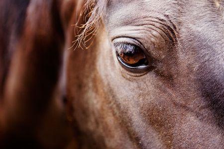 rancho: Un detalle de un caballo de ojos