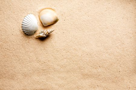 A shell on a background of golden warm sand photo