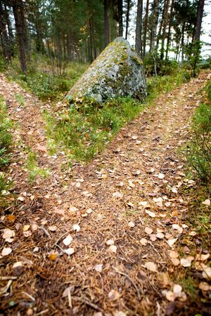 difficult journey: A path is split in the forest with two options