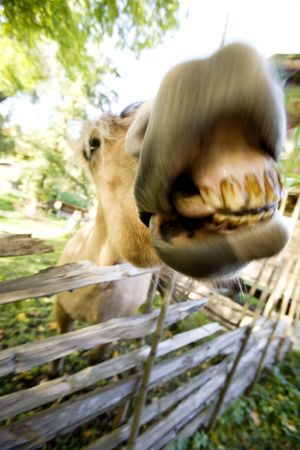 A crazy horse with motion blur to add to the craziness :) photo