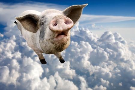 loco: Un cerdo volando a trav�s de las nubes en el cielo