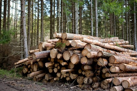 recently: A pile of logs recently harvested