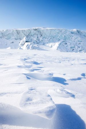 Polar bear foot prints in the snow - Svalbard, Norway photo