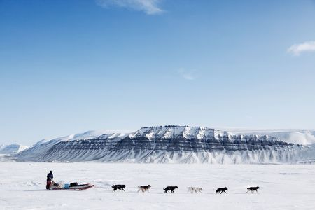 A dog sled running on a barren winter landscape photo