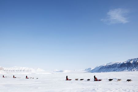 A number of dogsleds on a barren winter landscape photo