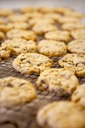Freshly backed chocolate chip cookies on a cooling rack - shallow depth of field photo