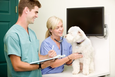 veterinary care: A dog at the vet having a check-up Stock Photo