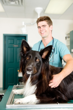 A large dog at a small animal clinic in the surgery prep. room.  Shallow depth of field, focus on dog photo