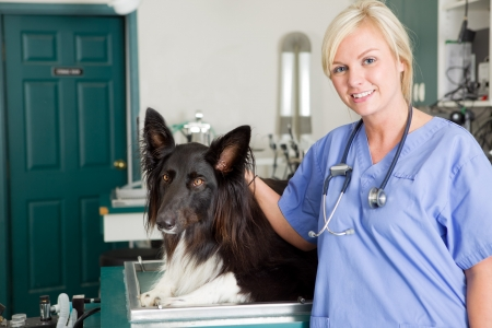 A portrait of a dog at the vet in the surgery preparation room photo