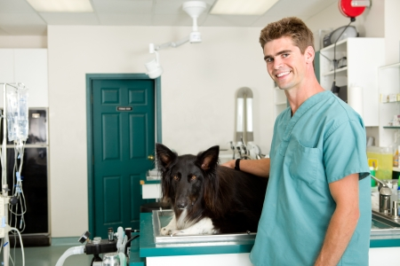A small animal clinic with a dog on the surgery prep table photo