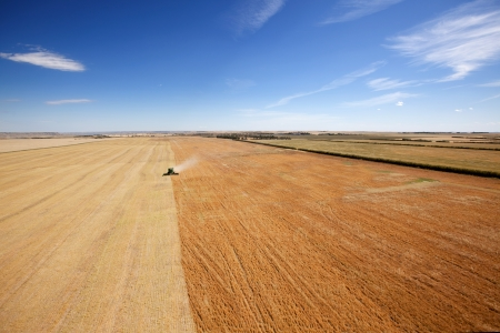 arial views: Aerial view of a combine harvesting lentils on the open prairie