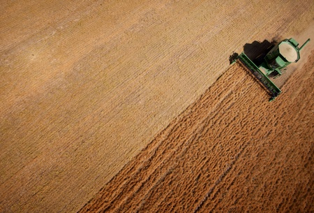 agricultural: Abstract view of a combine harvesting lentils in a large field