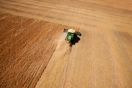 A combine harvesting a field of lentils on the prairie Stock Photo - 10393441