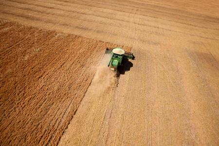 lentejas: Una cosecha de un campo de lentejas de la pradera se combinan