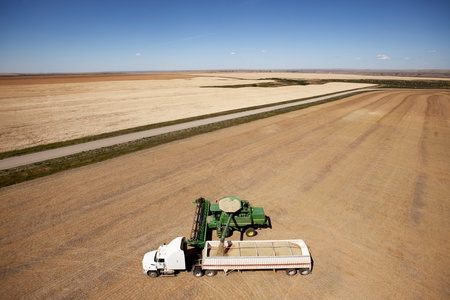 A combine unloading a harvest of lentils onto a truck on the prairie photo