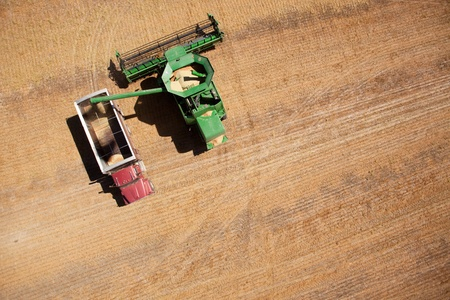 A harvester or combine filling a grain truck with lentils photo