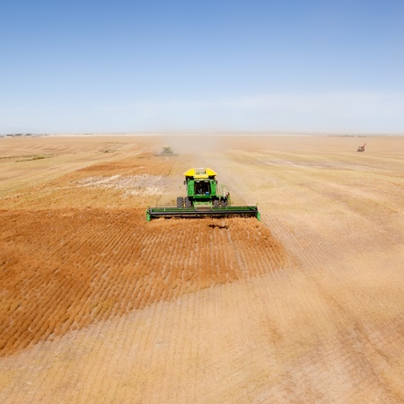 lentil: A green combine in a lentil field on the open prairie Stock Photo