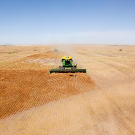 Een groene combineren in een linzen veld op de open prairie