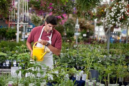 regar las plantas: Las plantas jóvenes de hombre de riego en invernadero