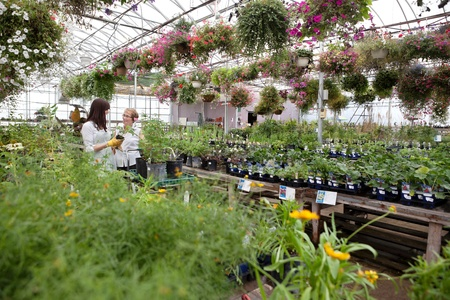 Woman communicating with female worker while buying plant photo