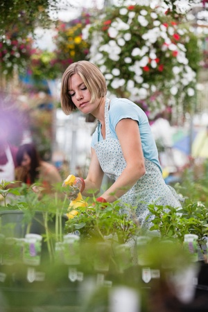 Young woman spraying water on plants at a plant nursery photo