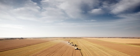 alberta: Panoramic landscape with four combines in a field on the open prairie