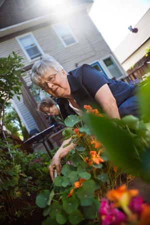 Portrait of lovely senior woman taking care of plants Stock Photo - 11048296