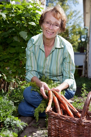 yard work: Portrait of pretty senior woman harvesting carrots from garden Stock Photo