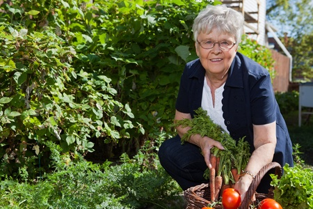 Portrait of elderly woman holding carrots and smiling Stock Photo - 11048270