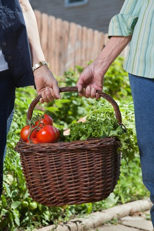 Close-up of senior women holding basket filled with vegetables photo