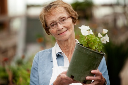 Potrait of a senior woman working in a garden center holding a potted plant photo
