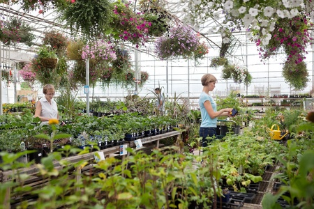 People shopping for plants at garden centre photo