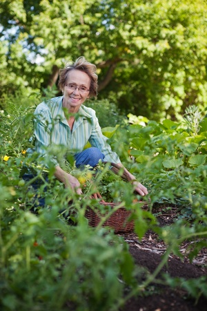 Portrait of smiling senior woman with basket in vegetable garden photo