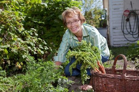 Portrait of senior woman harvesting carrots in field Stock Photo - 11048153
