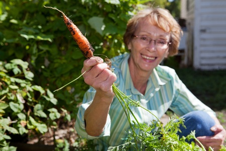 Portrait of smiling senior woman holding carrot Stock Photo - 11538743