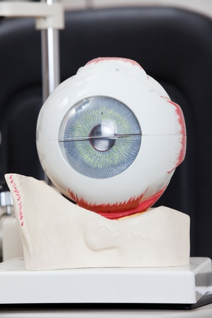 Detail of Medical eye model Stock Photo - 13264487